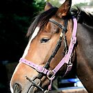 Pensive Pony by Greybeard