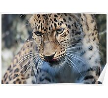 Leopard Lunch Poster