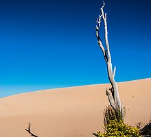 Spring in the Sand Dunes by Candice84