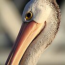 """Pelican Portrait"" by jonxiv"