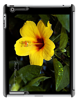 Yellow Hibiscus - - Cards, iPhone & iPad Cases by Maria A. Barnowl