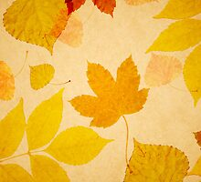 Fall leaves by rafo