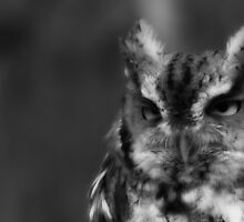 B&W of Eastern Screech Owl by NatureGreeting Cards ©ccwri