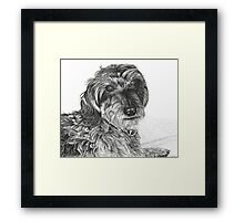 Schnell, Wire Haired Dachschund (cropped edge) Framed Print