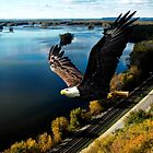 Eagle over the Mississippi River by Randy & Kay Branham