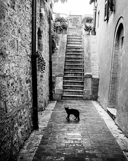 Black cat on the street of tuscany town by Tatianaphoto