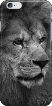 Lion by jammingene