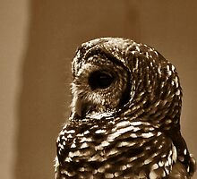 *Barred Owl in Sepia* by DeeZ (D L Honeycutt)