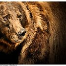Grizzly Bear -Yellowstone by Dennis Stewart