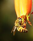 Hanging on for dear life by Graeme M