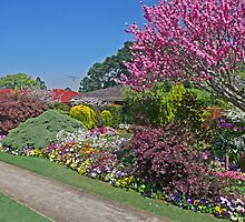 A Floral Border, Toowoomba, Qld, Australia by Margaret  Hyde