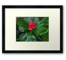 Crown of Thorns on a Rainy Day Framed Print