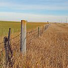 The Fence Row by mcstory