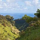 Along the Road to Hana, Maui by Barb White