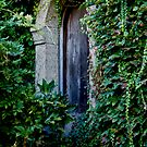 Window and Ivy by Richard Rushton