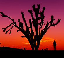 Sunset Over Mojave National Preserve by Alex Preiss
