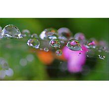 Garden Pearls Photographic Print