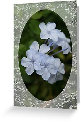 Plumbago by taiche
