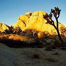 Sunset in Joshua Tree, Ca. by philw