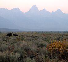 Grand Teton Moose by Brian Harig
