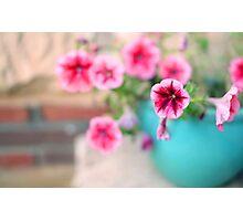 Pink Patunia Photographic Print