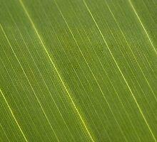 Palm Tree Leaf by Vac1