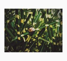 snail on miscanthus by NafetsNuarb