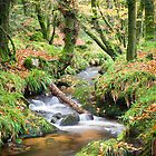 Golitha Falls by John Burtoft