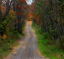 Its A Long Road Home by NatureGreeting Cards ©ccwri