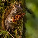 HUNGRY SQUIRREL by Sandy Stewart