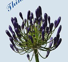 Card - African Lily  by Rod Johnson