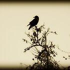 Black Bird by artinmyeyes