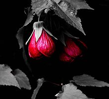 Red bells 2 by Tracey Phillips