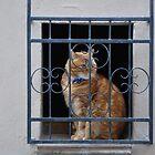 Cat in a Window by Helen Greenwood
