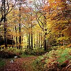 Autumn Woodland Walk by Simon Harris