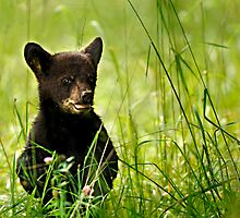 Bear Cub in Clover by Randy & Kay Branham