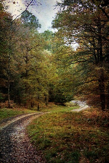 Autumn Road by Simon Harris