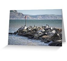 Cormorants Rock Greeting Card