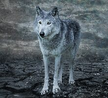 le loup gris by Jo-PinX