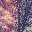 All the pretty lights (2) by Karin Elizabeth