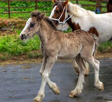 Foal at the Horse Fair by Tom Gomez