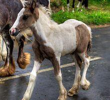 Foal at the Fair by Tom Gomez