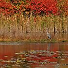Heron in Autumn by Nancy Barrett