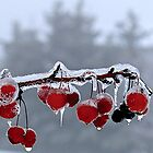Freezing Rain in the Capital! by Rose Landry