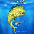Mahi Mahi by David Pearce