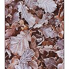 Frosty Autumn Leaves. by AlysonArtShop