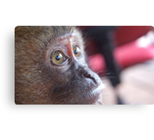 Monkey's Eyes Canvas Print