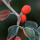 Winter frost by Ciaran Sidwell