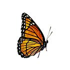 Monarch Buterfly-iPhone by onyonet photo studios