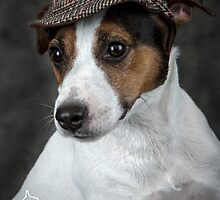 Jack in the Hat by Mark Cooper